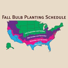 Planting flower bulbs is easy and pretty much goof-proof when you follow our planting schedule.