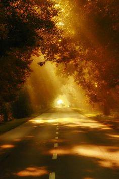 Autumn Road, Budapest, Hungary photo via karin