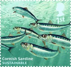 1st, Cornish Sardine from Sustainable Fish (2014)