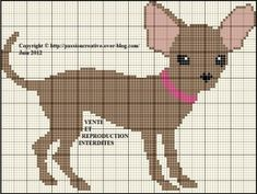 Chien---Chihuahua-marron.jpg