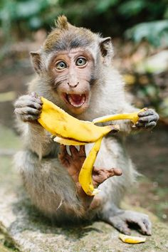 Going Bananas Photo by Cameron Zegers -- National Geographic Your Shot