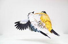 green design, eco design, sustainable design, paper sculptures, Diana Beltran Herrera, paper birds, Hanni Bkartlaid