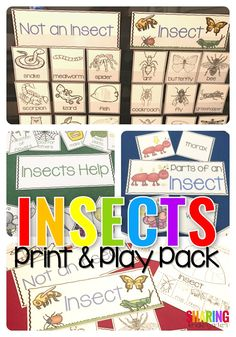 Insect Print & Play Pack | teaching | science | stem | kindergarten | preschool | pre-k | insect theme