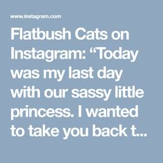 """Flatbush Cats on Instagram: """"Today was my last day with our sassy little princess. I wanted to take you back to the very beginning - six weeks ago - so you can see why…"""" • Instagram"""
