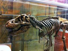 Natural History Museum - Brompton - South Kensington, London