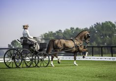 1589 Best Horse & Carriage images in 2019 | Beautiful horses, Horse