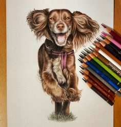 Domestic and Wild Animal Drawings. By Tatjana Bril. Realistic Drawings, My Drawings, Animal Paintings, Animal Drawings, Running Drawing, Color Pencil Sketch, Colored Pencil Artwork, Dog Portraits, Portrait Paintings