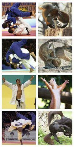 Animal judo compared to human judo.