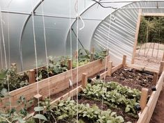 Green Fruit, Fruit And Veg, Grow Together, Urban Farming, Raised Beds, Permaculture, Vegetable Garden, Layout, France