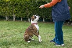 Dog Training at this site - http://dogtraining-5dnm1jw6.thetruthfulreviews.com