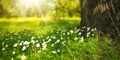 Le 4 Idee Top per una Vacanza di Primavera