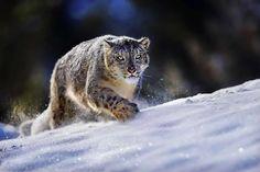Wildlife in photographs, by Suha Derbent