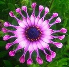 Best Flower Quotes