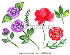 Rose and poppy. Hand drawn watercolor painting on white background