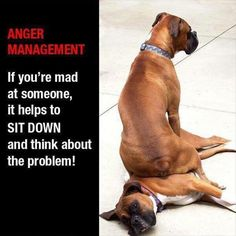 Anger Management: If you're mad at someone, it helps to sit down and think about the problem! Cute Animal Pictures, Funny Animal Pictures, Funny Photos, Funny Animals, Cute Animals, Crazy Animals, Interesting Animals, Boxer Love, Pet Treats