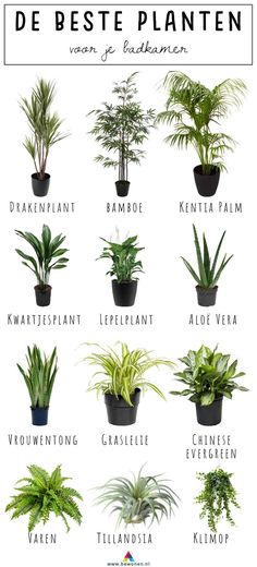 de beste planten voor je badkamer Totally hot: plants in your bathroom. But which plants are doing well there? Read which 12 plants are best placed in your bathroom!