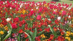 The Flower Garden@Greenwich Park