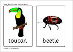 Jungle animal flash cards (SB7722) - SparkleBox