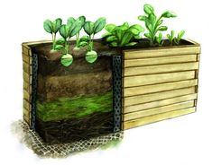 Looking to reduce your carbon footprint? Organic raised bed gardens are a great choice for a beginner and chock-full of great benefits. Garden Soil, Raised Garden Beds, Raised Beds, Vegetable Garden, Build A Frame, How To Make Labels, Plant Markers, Top Soil, Organic Matter