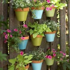 Container planting on a fence. I think this is a good idea for my backyard.