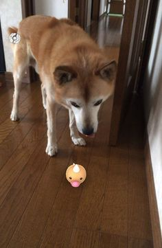 Des preuves que les animaux peuvent voir les Pokemon Go 2Tout2Rien