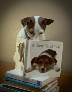 Jack Russell reading