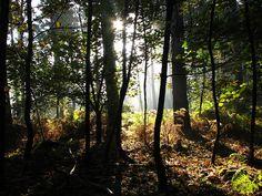 autumn at daisey Places Ive Been, Autumn, Explore, Plants, Fall, Exploring, Planters, Plant, Planting