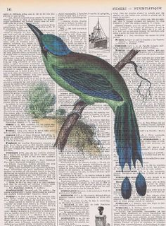 Blue.Bird,Antique Book Page. French.Colourful, birthday gift,  Altered,Printed in Paris,home decor, buy 3 get 1 FREE.feathers.avian.collage ...