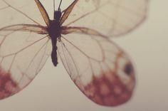 i am a butter fly