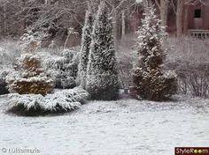 Vinter i trädgården - Google-søk