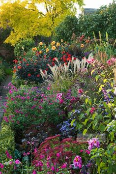 Beautiful plant mix - like how the grasses and stems of the flowers add height and texture interest.