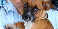 Dumped pup needs surgery http://www.givealittle.co.nz/org/WhangareiSPCA