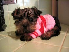 This is a Snorkie which is a Miniature Schnauzer and Yorkshire Terrier mix How can you NOT smile when you see these pics? Schnauzer Mix, Boy Best Friend, Pets 3, All Things Cute, Animal Fashion, Yorkies, Terrier Mix, Yorkshire Terrier, Cute Baby Animals