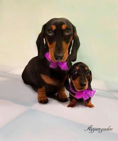 Mama and baby in their matching fushia bows!