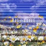 Striped daisies pattern