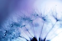 Blue period~Transparent by Lafugue Logos on 500px