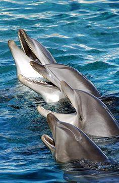 Dolphins 2 by Fabio Diena on 500px