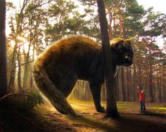 Big Cat And Small Man In Forest