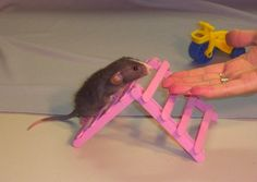 The Agile Rat - Front Page