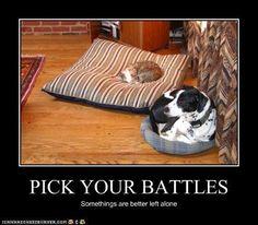 #CatTips