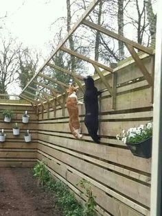 cat proof fence I can dream for Kitty crew too (always want best for kids, even fur ones!)