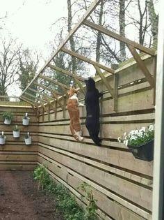 Jardín para gatos