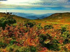 Boa tarde :D Castanhos vermelhos amarelos verdes azuis e branco: a paleta de cores de Outono no seu esplendor em Arcos de  nesta fotografia partilhada por Vilar de Suente - http://ift.tt/1Ug2t4z