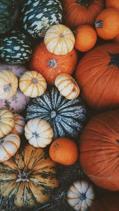 Here are the Halloween Wallpaper Vsco. This post about Halloween Wallpaper Vsco was posted under the Halloween Wallpaper category by our team at October 2019 at pm. Hope you enjoy it and don& forget to share this post. Cute Fall Wallpaper, October Wallpaper, Wallpaper Free, Pretty Phone Wallpaper, Halloween Wallpaper, Pretty Wallpapers, Aesthetic Iphone Wallpaper, Fall Leaves Wallpaper, Fall Wallpaper Tumblr