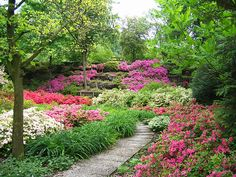 Lawn Alternative: Azalea garden