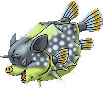 Wild Boarfish