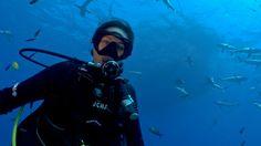 Sarah Shark and her crew's latest adventure to Osprey Reef! #scuba #scubadiving http://www.scubadiving.com.au/