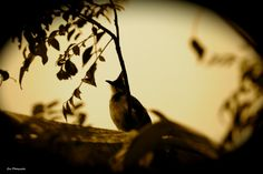 Melancholy by SREEKUMAR  on 500px