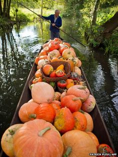 Farmer Harald Wenske punts his boat loaded with pumpkins on a small canal near Lehde in the Spreewald region of southern Germany. The farmer's pumpkin field can only be reached by boat.