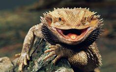 #reptiles #animales #mascotas #iguana #alimento #iluminacion #naturaleza. Iluminación para reptiles: Tienda online para mascotas: www.theanimallshop.com